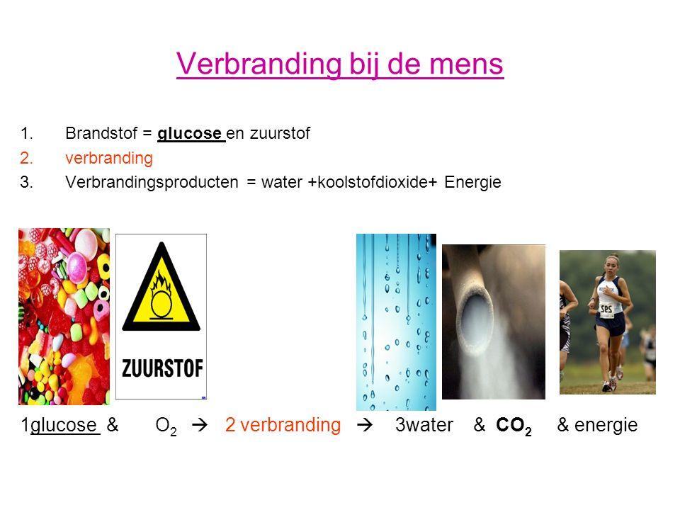 Verbranding bij de mens 1.Brandstof = glucose en zuurstof 2.verbranding 3.Verbrandingsproducten = water +koolstofdioxide+ Energie 1glucose & O 2  2 v