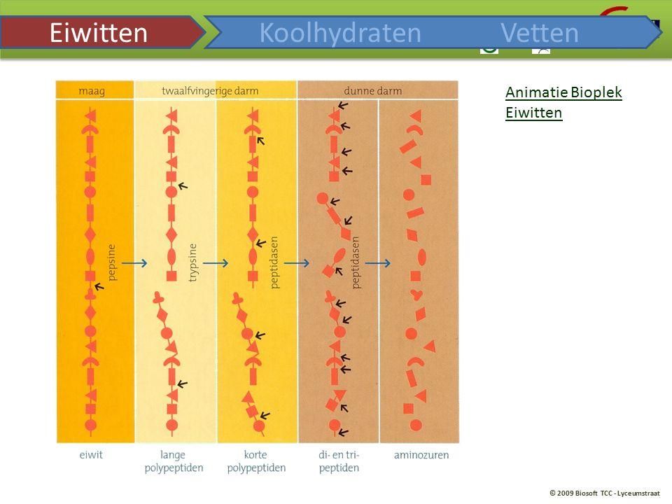 © 2009 Biosoft TCC - Lyceumstraat Animatie Bioplek Eiwitten KoolhydratenVetten