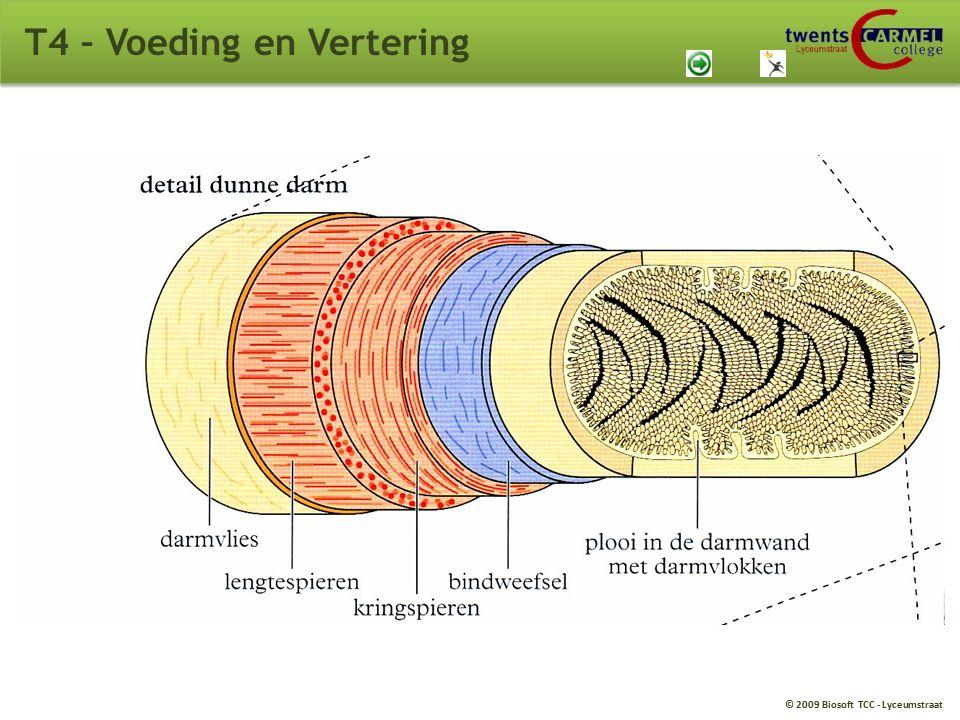 © 2009 Biosoft TCC - Lyceumstraat T4 – Voeding en Vertering