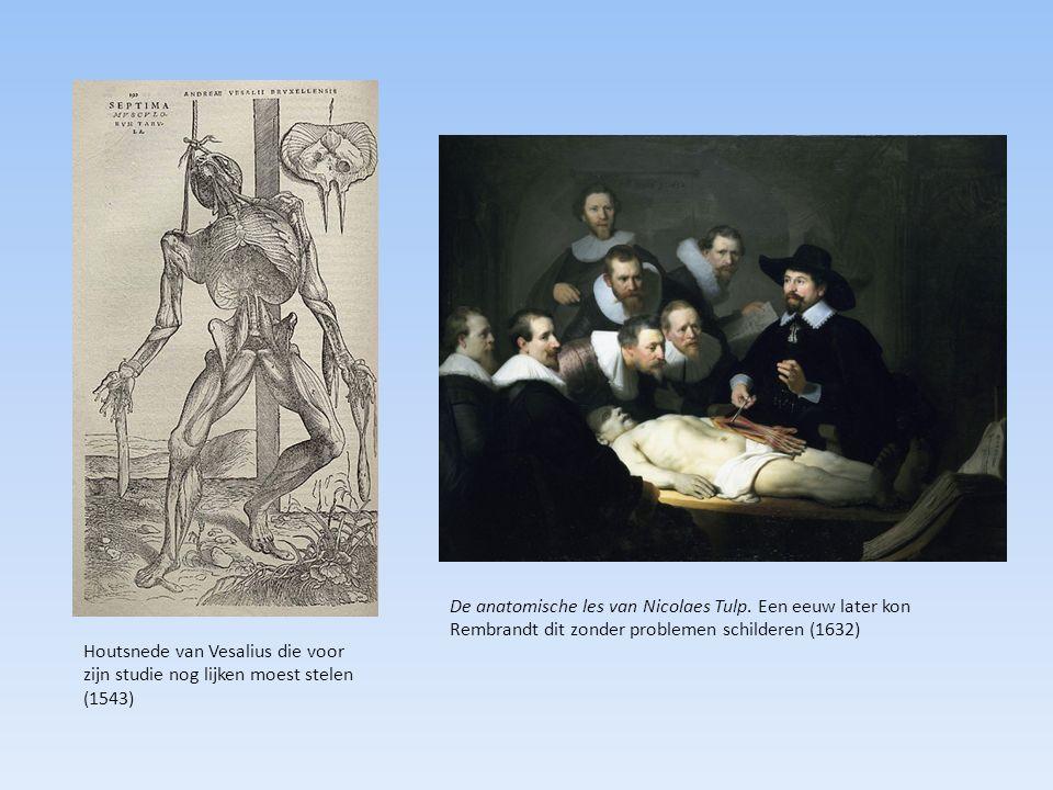 Houtsnede van Vesalius die voor zijn studie nog lijken moest stelen (1543) De anatomische les van Nicolaes Tulp. Een eeuw later kon Rembrandt dit zond