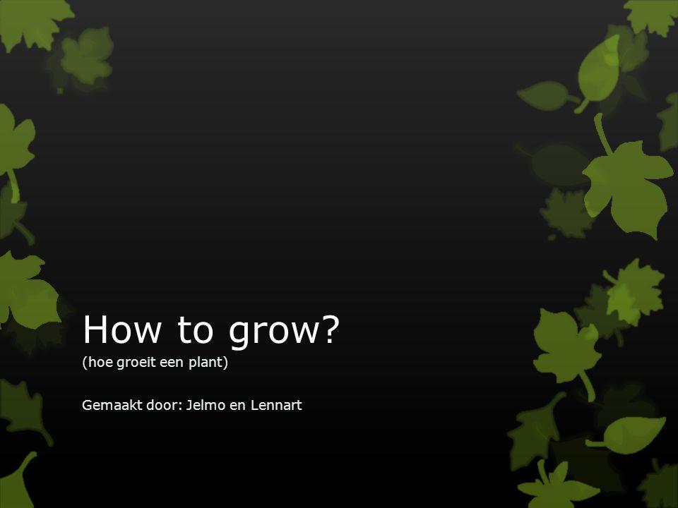 How to grow? (hoe groeit een plant) Gemaakt door: Jelmo en Lennart