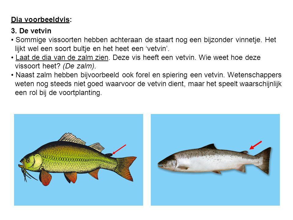 Dia voorbeeldvis: 3. De vetvin Sommige vissoorten hebben achteraan de staart nog een bijzonder vinnetje. Het lijkt wel een soort bultje en het heet ee