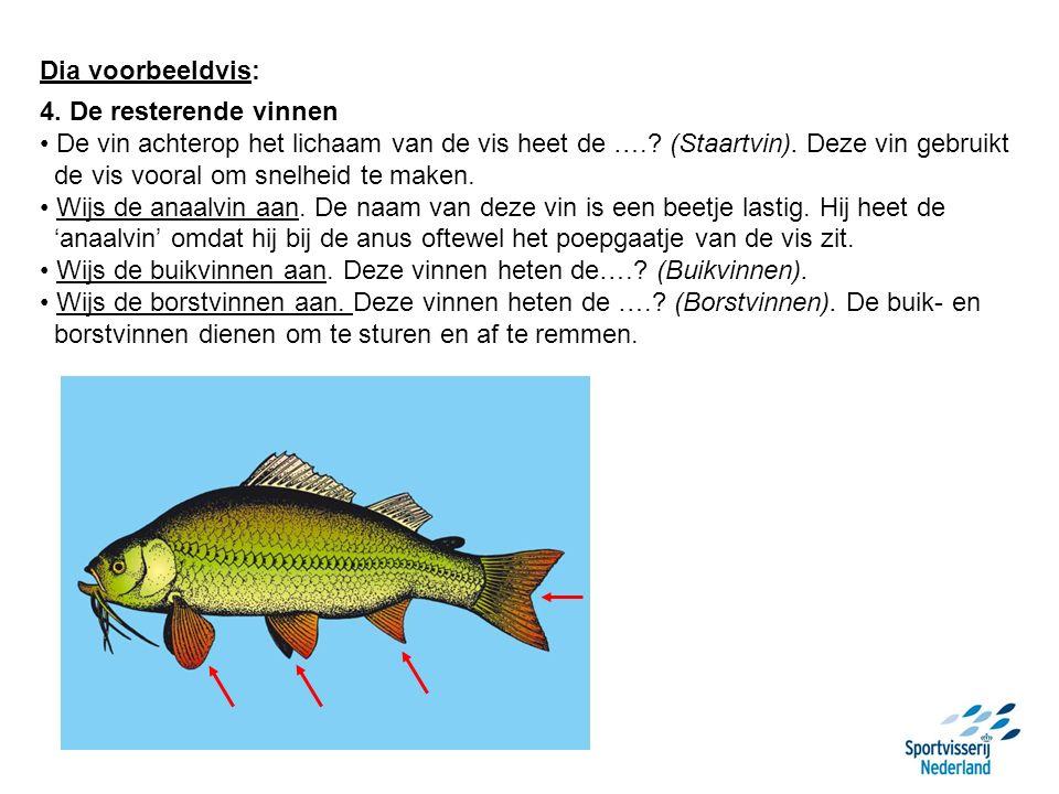 Dia voorbeeldvis: 4. De resterende vinnen De vin achterop het lichaam van de vis heet de ….? (Staartvin). Deze vin gebruikt de vis vooral om snelheid