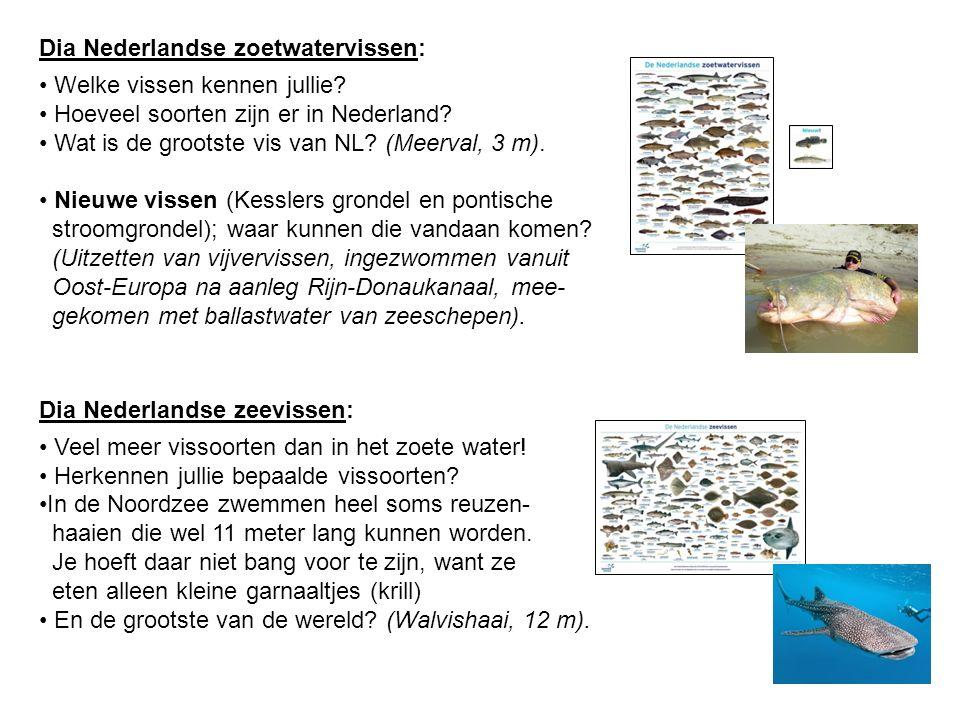 Dia Nederlandse zoetwatervissen: Welke vissen kennen jullie? Hoeveel soorten zijn er in Nederland? Wat is de grootste vis van NL? (Meerval, 3 m). Nieu