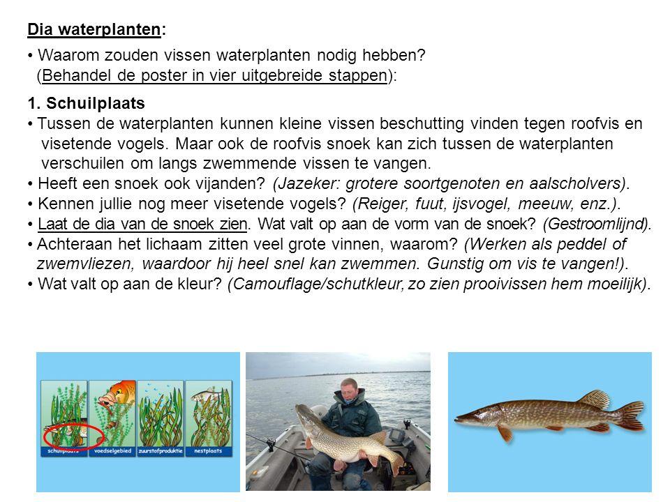 Dia waterplanten: Waarom zouden vissen waterplanten nodig hebben? (Behandel de poster in vier uitgebreide stappen): 1. Schuilplaats Tussen de waterpla