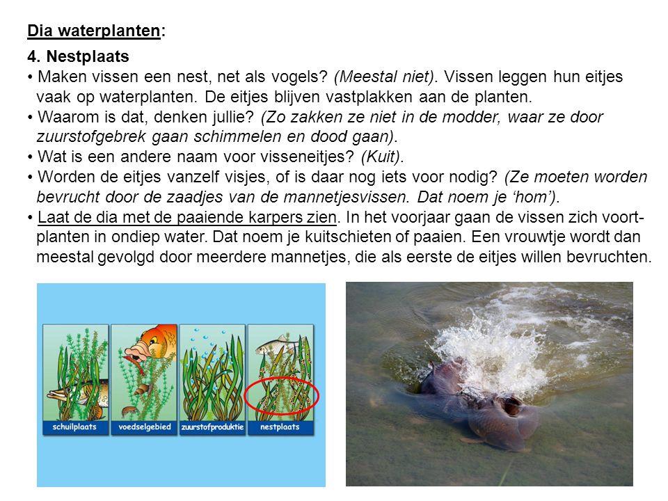 Dia waterplanten: 4. Nestplaats Maken vissen een nest, net als vogels? (Meestal niet). Vissen leggen hun eitjes vaak op waterplanten. De eitjes blijve