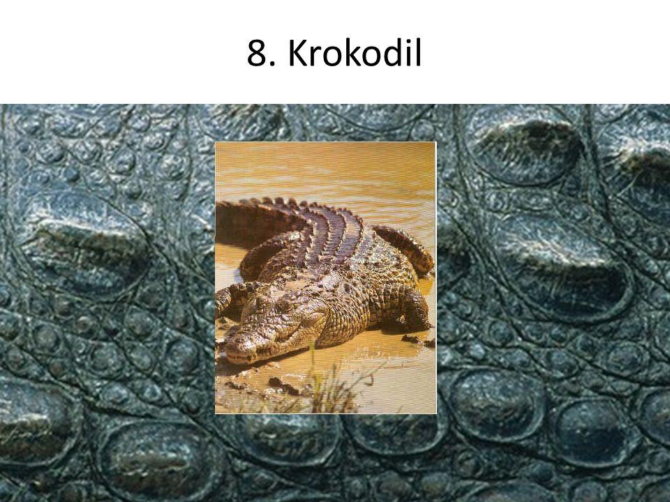 8. Krokodil