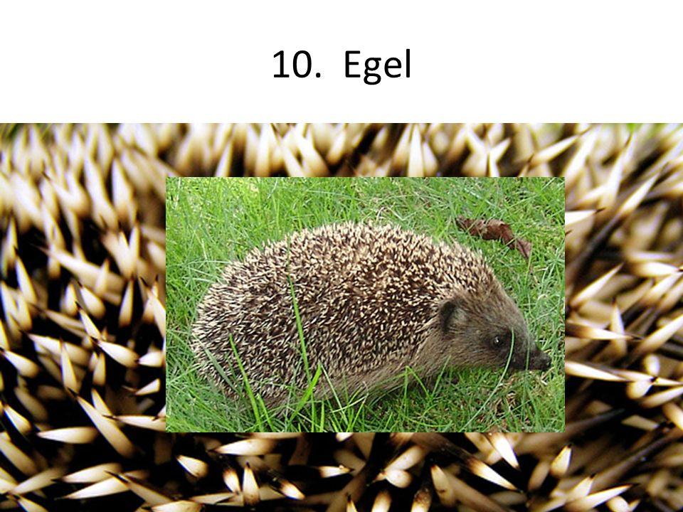 10. Egel