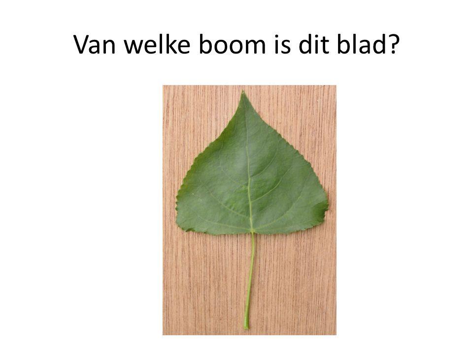 Van welke boom is dit blad?