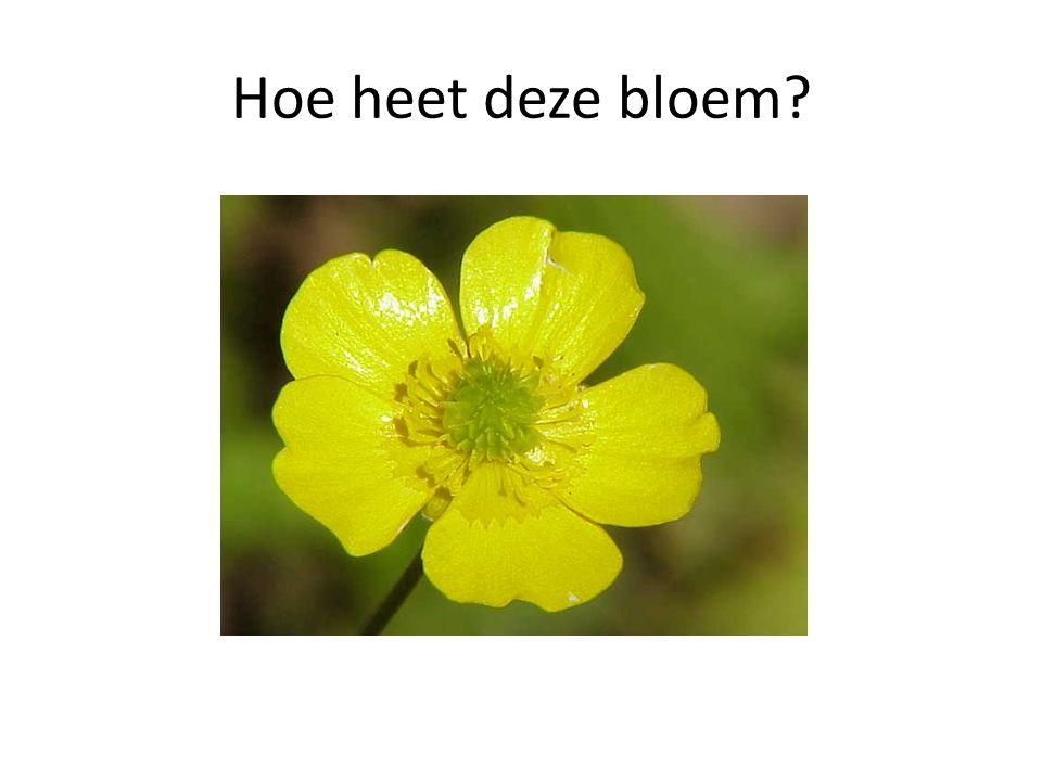 Hoe heet deze bloem
