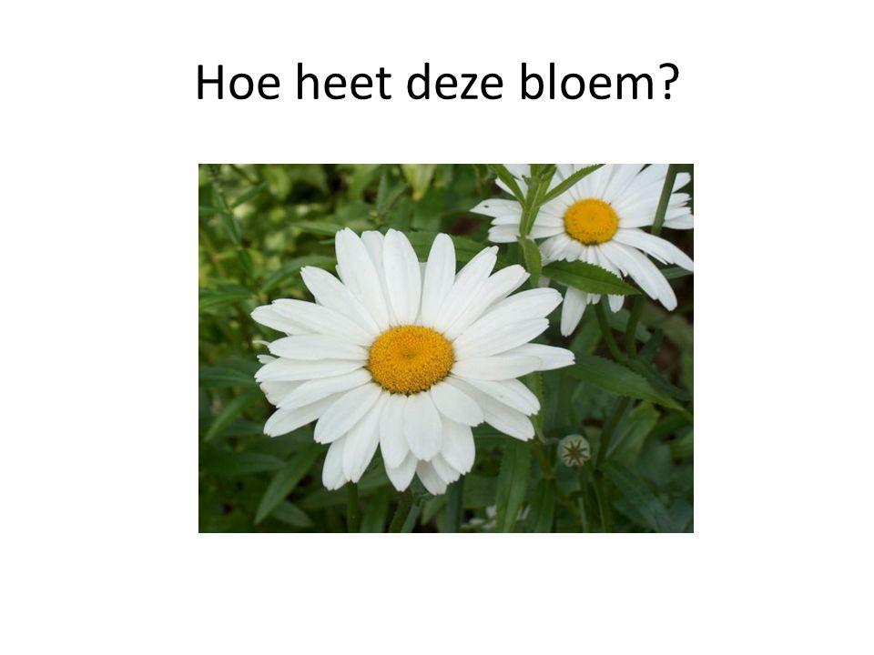 Hoe heet deze bloem?
