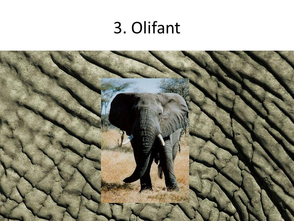 3. Olifant
