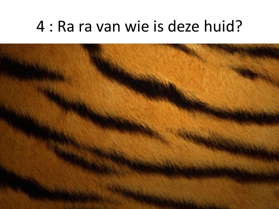 4. Tijger