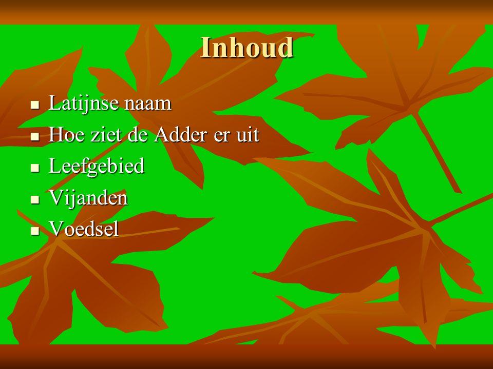 Inhoud Latijnse naam Latijnse naam Hoe ziet de Adder er uit Hoe ziet de Adder er uit Leefgebied Leefgebied Vijanden Vijanden Voedsel Voedsel