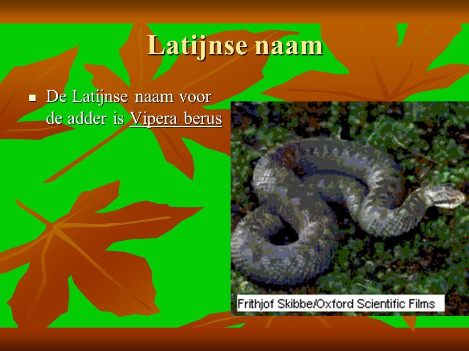 Latijnse naam De Latijnse naam voor de adder is Vipera berus De Latijnse naam voor de adder is Vipera berus