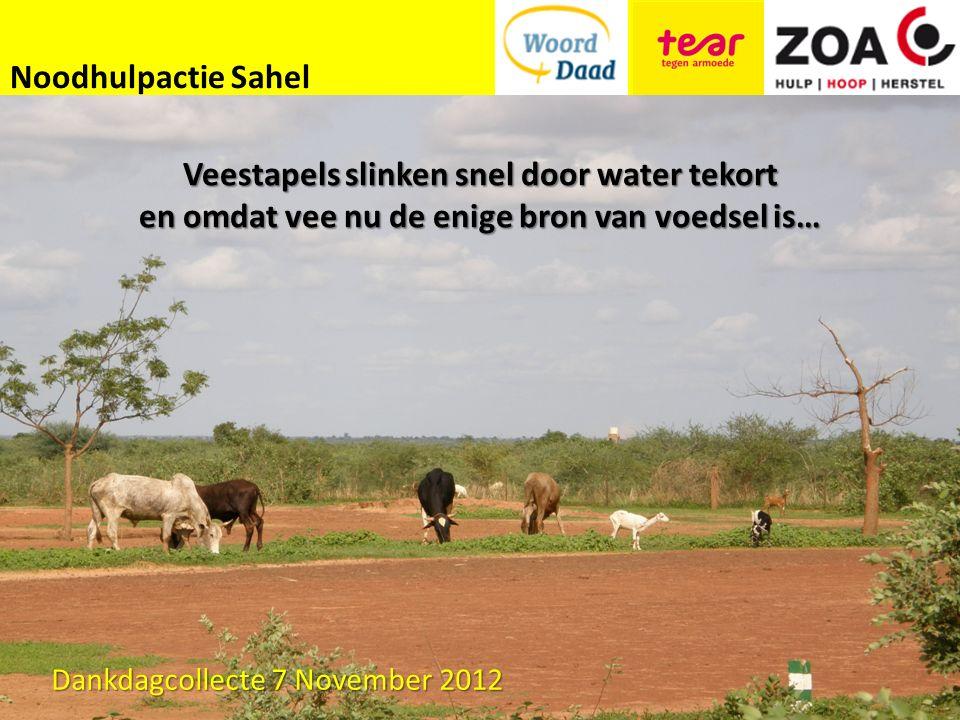 Noodhulpactie Sahel Veestapels slinken snel door water tekort en omdat vee nu de enige bron van voedsel is… Dankdagcollecte 7 November 2012