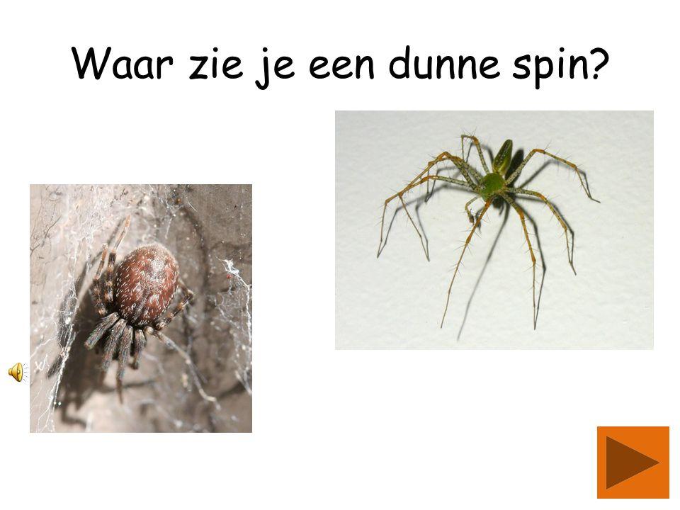 Welke spin heeft dikke poten?