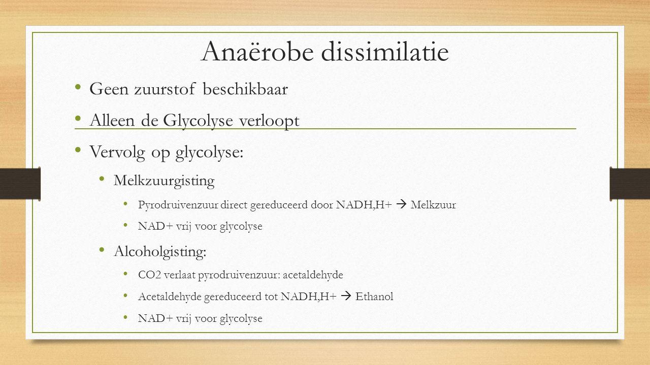 Anaërobe dissimilatie Geen zuurstof beschikbaar Alleen de Glycolyse verloopt Vervolg op glycolyse: Melkzuurgisting Pyrodruivenzuur direct gereduceerd