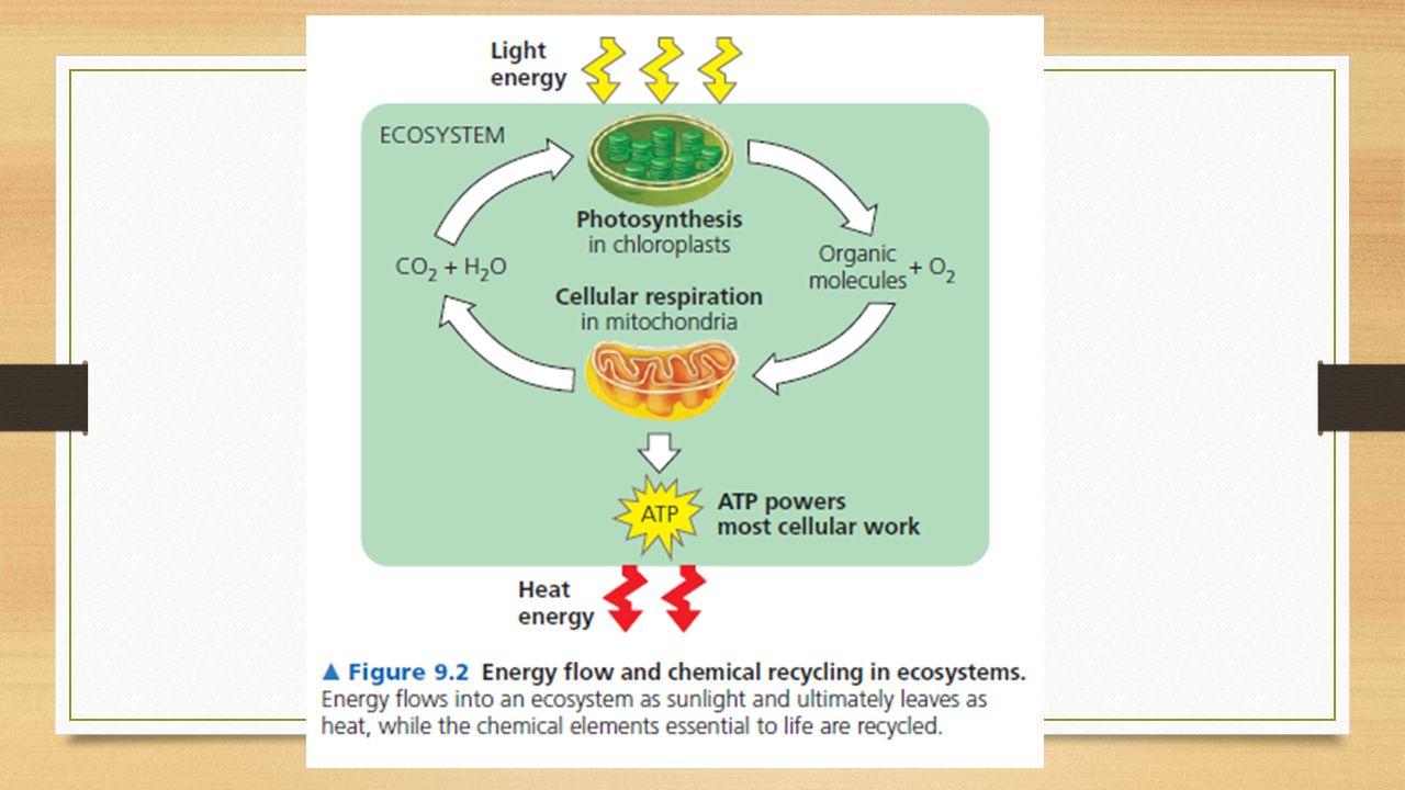 Dissimilatie Dissimilatie van glucose met zuurstof = aerobe dissimilatie= verbranding Dissimilatie zonder zuurstof = anaerobe dissimilatie = gisting Reactievergelijking: C 6 H 12 O 6 + 6O 2  6 CO 2 + 6 H 2 O + energie (genoeg voor 38 ATP)