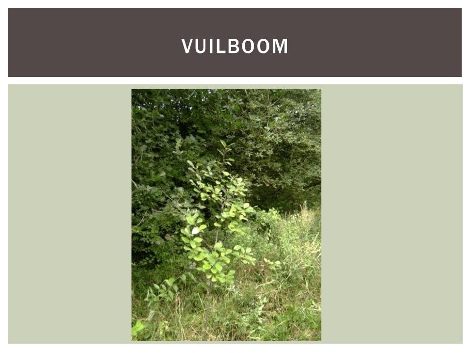 VUILBOOM