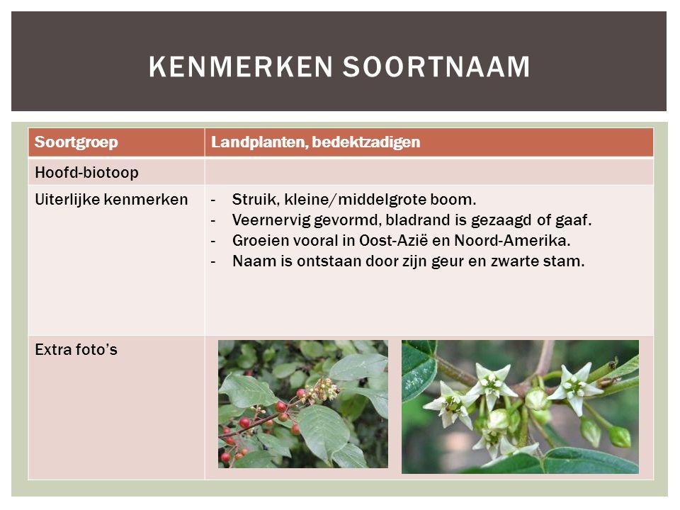 SoortgroepLandplanten, bedektzadigen Hoofd-biotoop Uiterlijke kenmerken-Struik, kleine/middelgrote boom. -Veernervig gevormd, bladrand is gezaagd of g