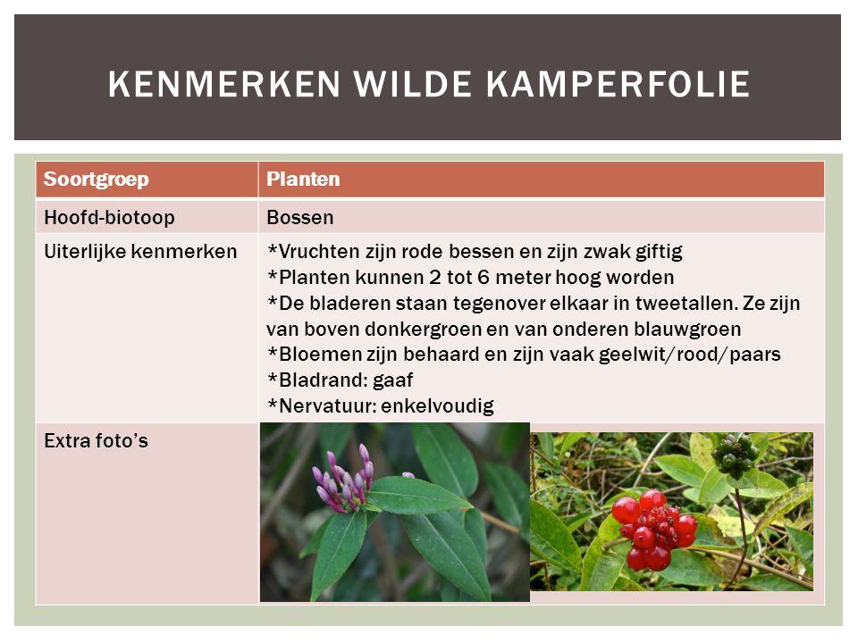 SoortgroepPlanten Hoofd-biotoopBossen Uiterlijke kenmerken*Vruchten zijn rode bessen en zijn zwak giftig *Planten kunnen 2 tot 6 meter hoog worden *De