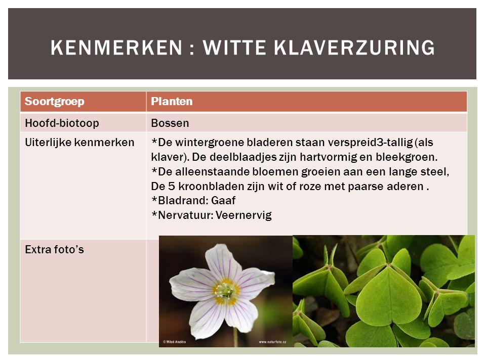 SoortgroepPlanten Hoofd-biotoopBossen Uiterlijke kenmerken*De wintergroene bladeren staan verspreid3-tallig (als klaver). De deelblaadjes zijn hartvor