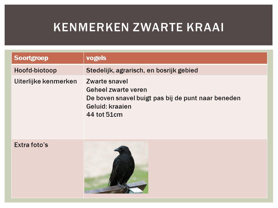 Soortgroepvogels Hoofd-biotoopStedelijk, agrarisch, en bosrijk gebied Uiterlijke kenmerkenZwarte snavel Geheel zwarte veren De boven snavel buigt pas