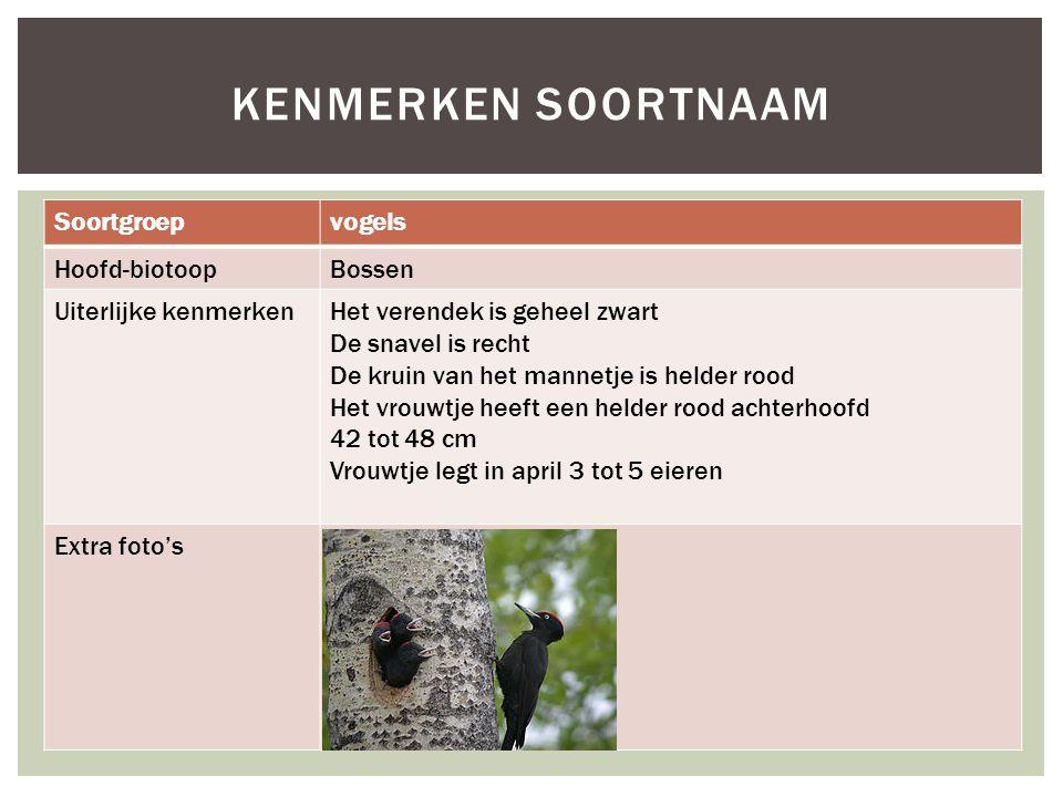 Soortgroepvogels Hoofd-biotoopBossen Uiterlijke kenmerkenHet verendek is geheel zwart De snavel is recht De kruin van het mannetje is helder rood Het