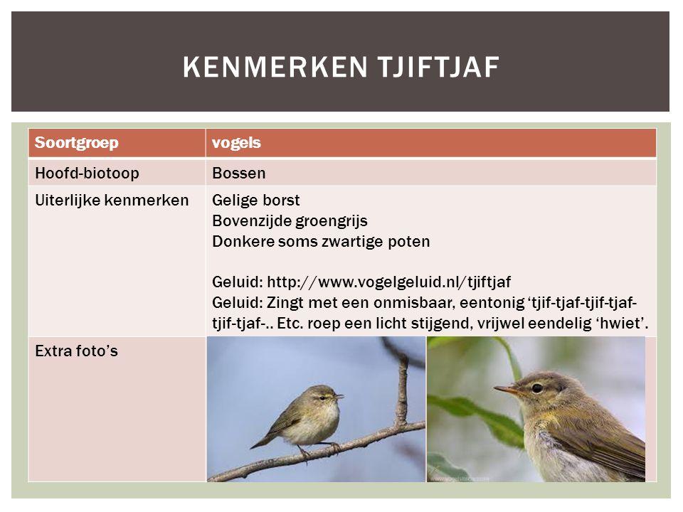 Soortgroepvogels Hoofd-biotoopBossen Uiterlijke kenmerkenGelige borst Bovenzijde groengrijs Donkere soms zwartige poten Geluid: http://www.vogelgeluid