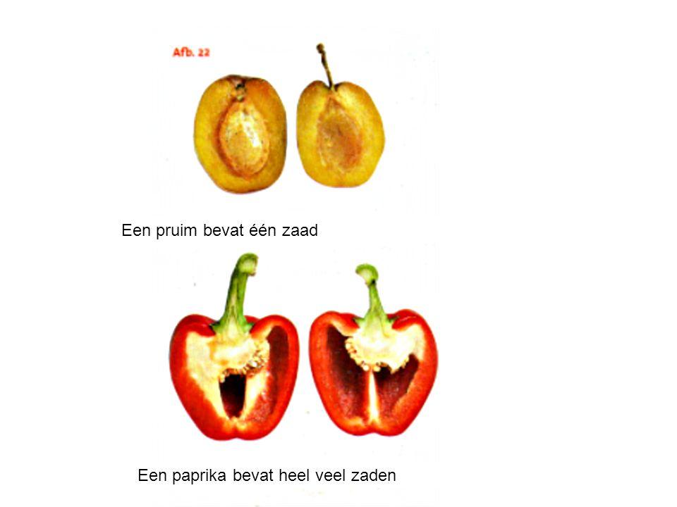 Een pruim bevat één zaad Een paprika bevat heel veel zaden