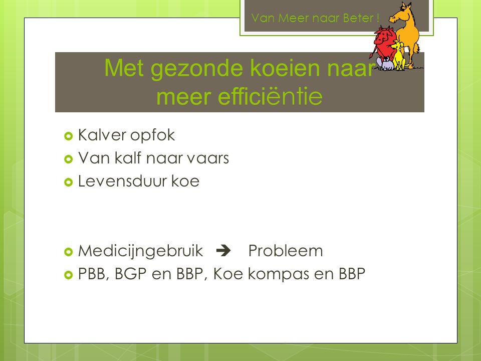 Met gezonde koeien naar meer effici ëntie  Kalver opfok  Van kalf naar vaars  Levensduur koe  Medicijngebruik  Probleem  PBB, BGP en BBP, Koe kompas en BBP Van Meer naar Beter !