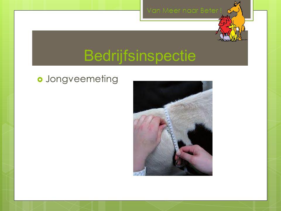 Bedrijfsinspectie  Jongveemeting Van Meer naar Beter !