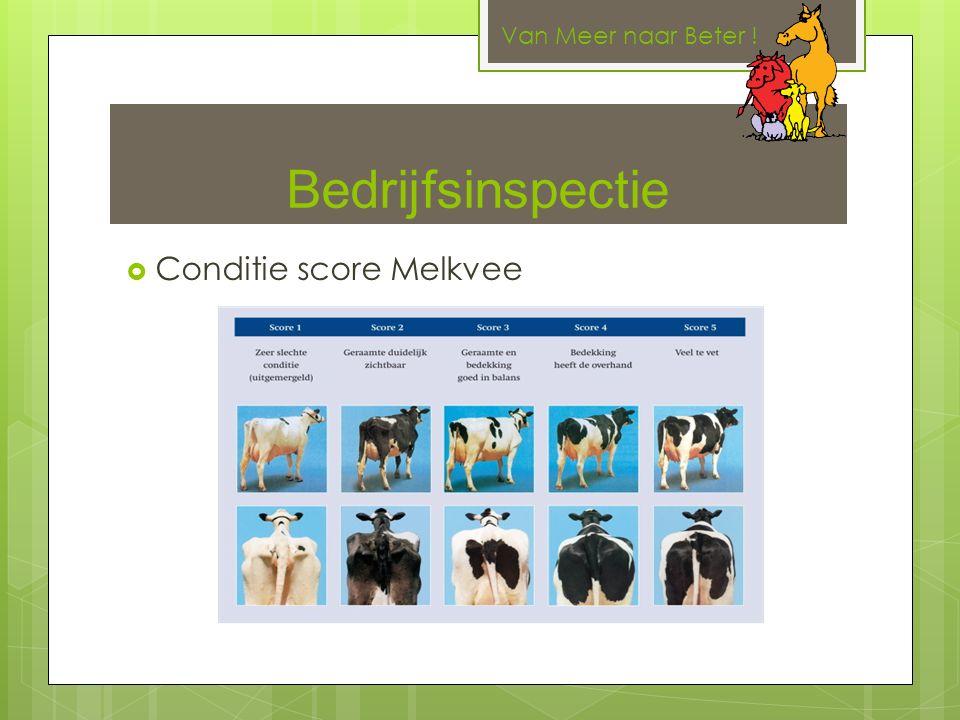 Bedrijfsinspectie  Conditie score Melkvee Van Meer naar Beter !