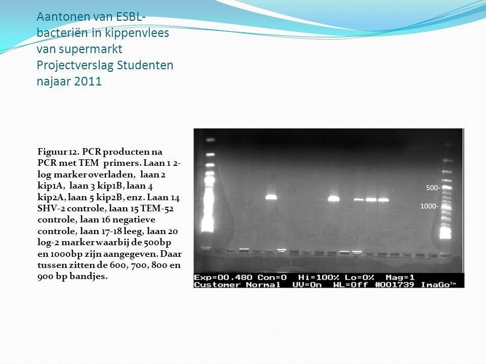 Aantonen van ESBL- bacteriën in kippenvlees van supermarkt Projectverslag Studenten najaar 2011 Figuur 12. PCR producten na PCR met TEM primers. Laan