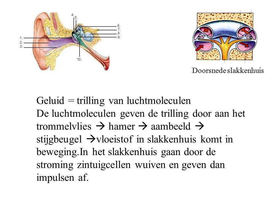 Geluid = trilling van luchtmoleculen De luchtmoleculen geven de trilling door aan het trommelvlies  hamer  aambeeld  stijgbeugel  vloeistof in sla