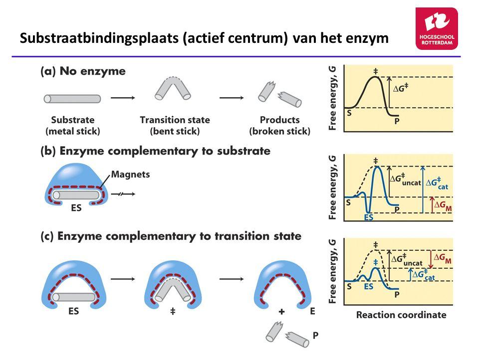 13 Substraatbindingsplaats (actief centrum) van het enzym