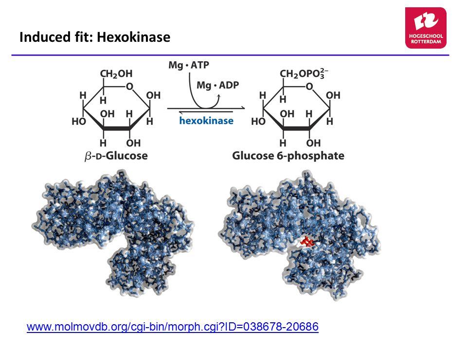 Induced fit: Hexokinase www.molmovdb.org/cgi-bin/morph.cgi?ID=038678-20686