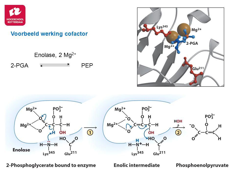 19 Voorbeeld werking cofactor Enolase, 2 Mg 2+ 2-PGA PEP