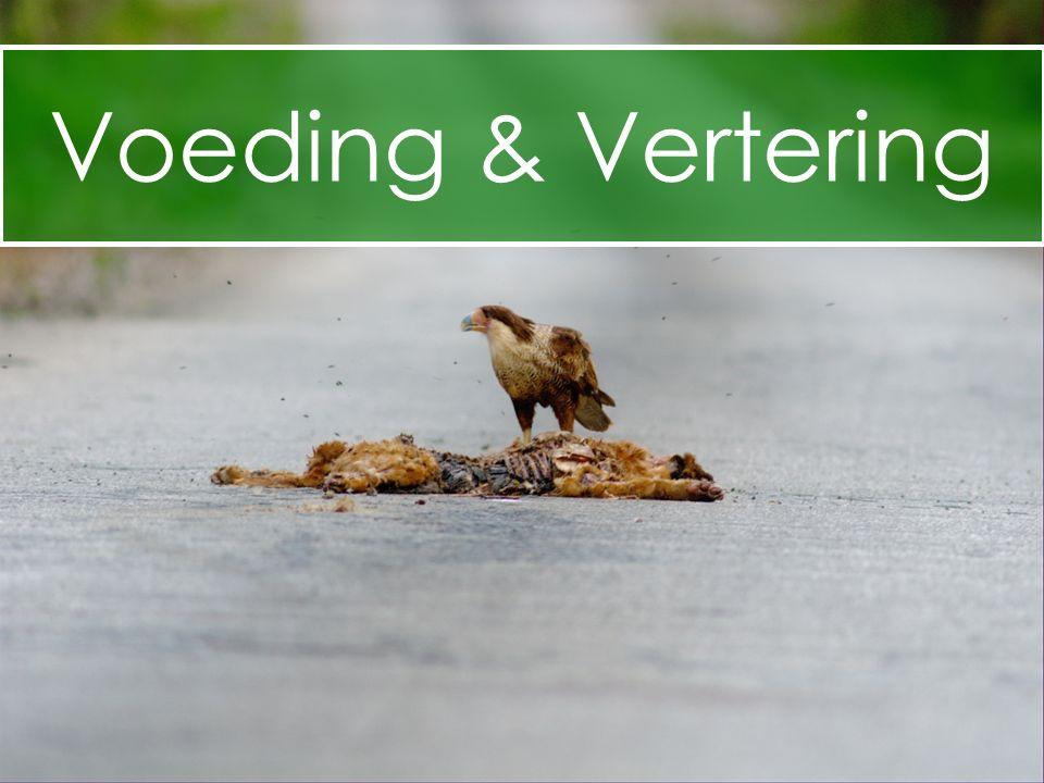 Voeding & Vertering