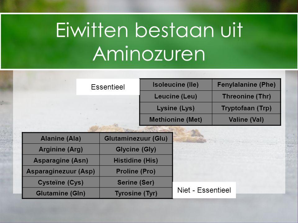 Eiwitten bestaan uit Aminozuren Isoleucine (Ile)Fenylalanine (Phe) Leucine (Leu)Threonine (Thr) Lysine (Lys)Tryptofaan (Trp) Methionine (Met)Valine (Val) Alanine (Ala)Glutaminezuur (Glu) Arginine (Arg)Glycine (Gly) Asparagine (Asn)Histidine (His) Asparaginezuur (Asp)Proline (Pro) Cysteïne (Cys)Serine (Ser) Glutamine (Gln)Tyrosine (Tyr) Essentieel Niet - Essentieel