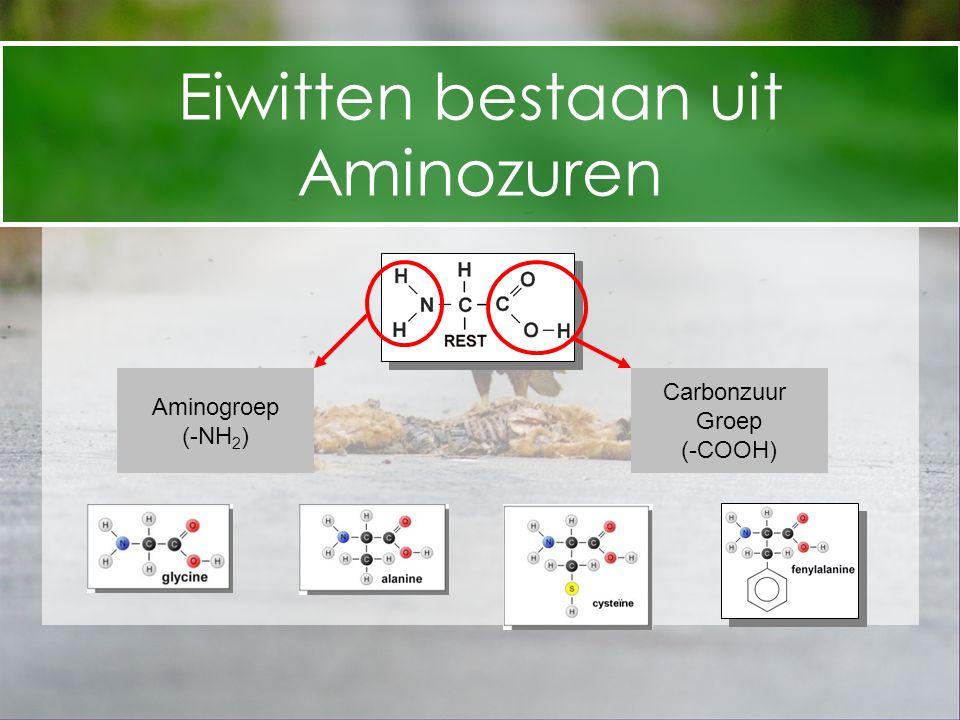 Eiwitten bestaan uit Aminozuren Aminogroep (-NH 2 ) Carbonzuur Groep (-COOH)