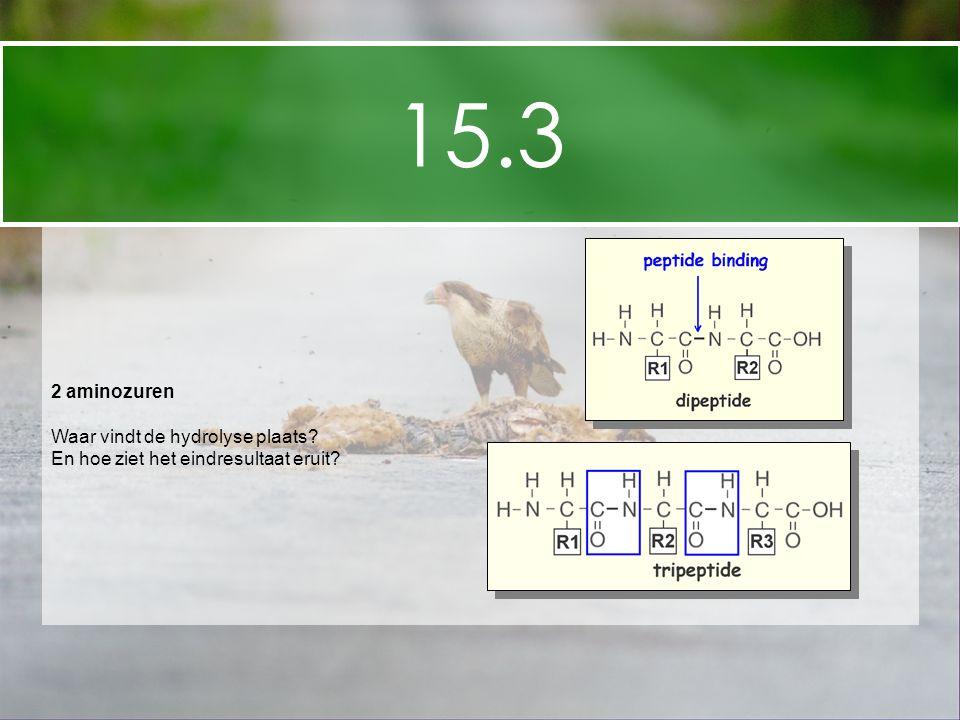 15.3 2 aminozuren Waar vindt de hydrolyse plaats? En hoe ziet het eindresultaat eruit?
