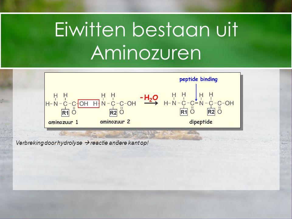 Eiwitten bestaan uit Aminozuren Verbreking door hydrolyse  reactie andere kant op!