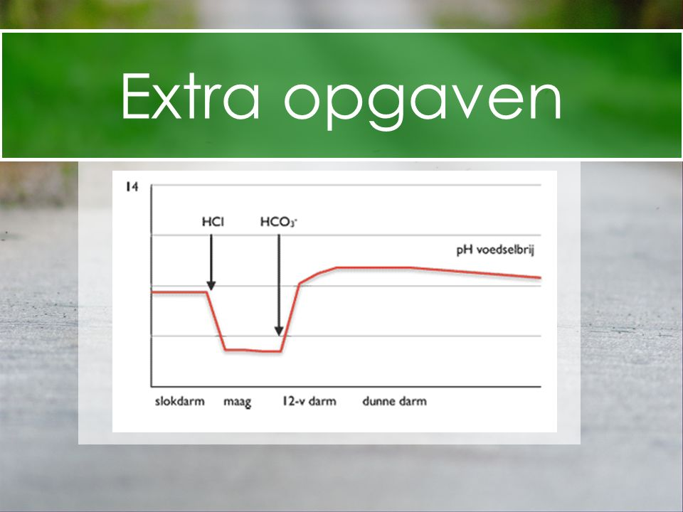 Extra opgaven