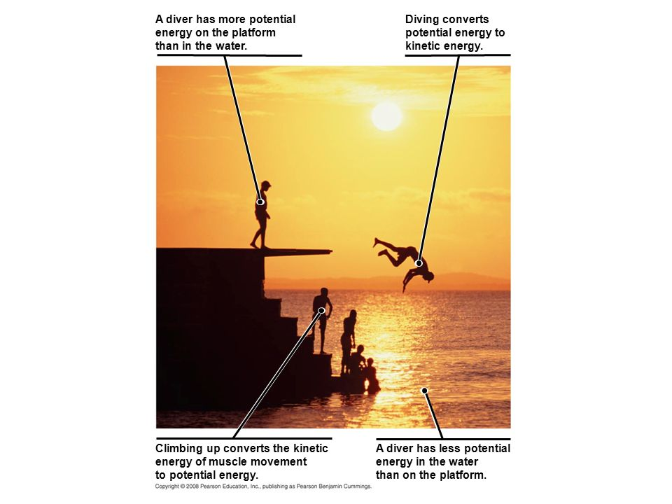 Climbing up converts the kinetic energy of muscle movement to potential energy. A diver has less potential energy in the water than on the platform. D