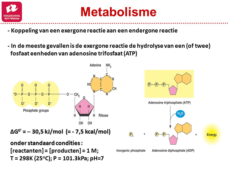 - Koppeling van een exergone reactie aan een endergone reactie - In de meeste gevallen is de exergone reactie de hydrolyse van een (of twee) fosfaat eenheden van adenosine trifosfaat (ATP) ΔG 0' = ─ 30,5 kJ/mol (= - 7,5 kcal/mol) onder standaard condities : [reactanten] = [producten] = 1 M; T = 298K (25 o C); P = 101.3kPa; pH=7 Metabolisme