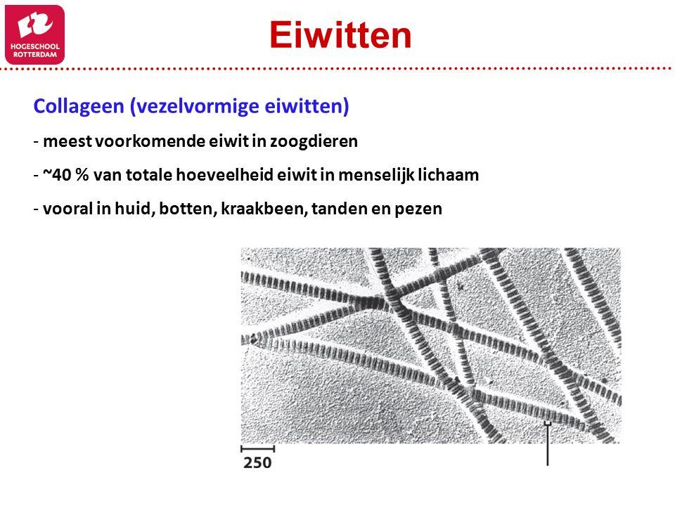 Collageen (vezelvormige eiwitten) - meest voorkomende eiwit in zoogdieren - ~40 % van totale hoeveelheid eiwit in menselijk lichaam - vooral in huid, botten, kraakbeen, tanden en pezen Eiwitten