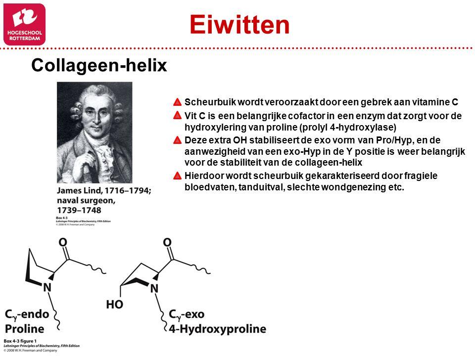 Collageen-helix Scheurbuik wordt veroorzaakt door een gebrek aan vitamine C Vit C is een belangrijke cofactor in een enzym dat zorgt voor de hydroxylering van proline (prolyl 4-hydroxylase) Deze extra OH stabiliseert de exo vorm van Pro/Hyp, en de aanwezigheid van een exo-Hyp in de Y positie is weer belangrijk voor de stabiliteit van de collageen-helix Hierdoor wordt scheurbuik gekarakteriseerd door fragiele bloedvaten, tanduitval, slechte wondgenezing etc.