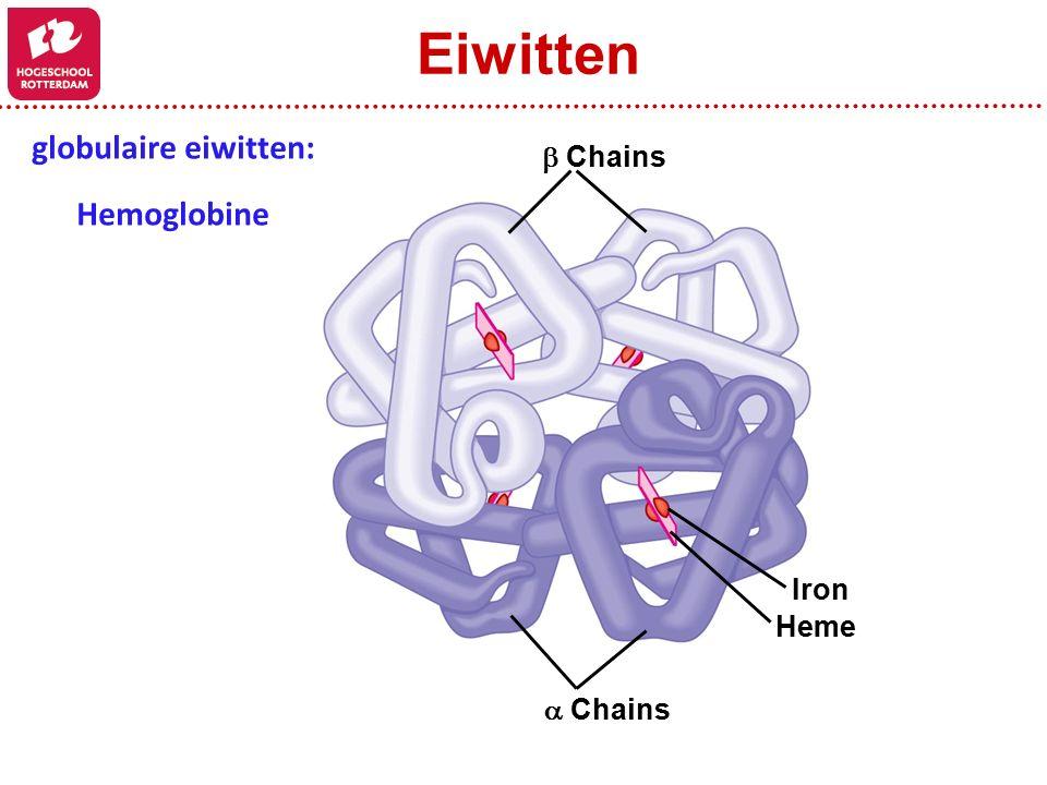  Chains Heme Iron  Chains globulaire eiwitten: Hemoglobine Eiwitten